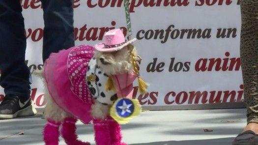 Un carnaval para las mascotas en Venezuela