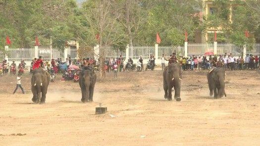Carrera de elefantes ¿Diversión o crueldad?