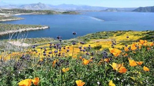 La súper floración de California