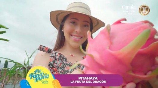 Cosecha de la fruta de Pitahaya