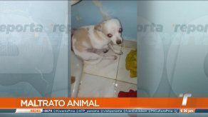 Detienen a joven que publicaba vídeos donde maltrataba a su mascota en Panamá Este