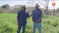 Conoce cómo se realiza la siembra de cultivo y tomate