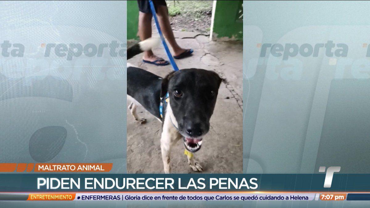Perro fue abandonado por su dueño en Pedregal