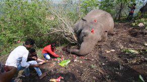 Hallados en India 18 elefantes muertos probablemente a causa de un rayo