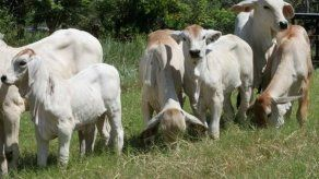 Ministro Pino pide a ganaderos denunciar el hurto pecuario