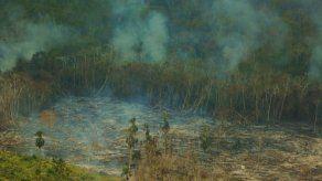 Veraguas ha perdido más de 48 mil hectáreas de cobertura vegetal en los últimos 7 años