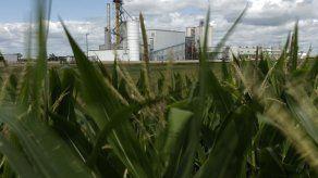 Gobierno de EEUU falló en estudio sobre impacto de etanol