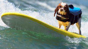 Concurso Anual de Perros Surfistas