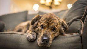 Enfermedades transmitidas por mascotas aumentan en primavera y verano