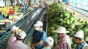 Panamá reanuda exportaciones de sandía y melones hacia Europa