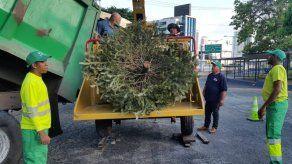 AAUD da inicio a operativo de recolección de arbolitos de Navidad