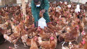 Nuevos brotes de gripe aviar en Taiwán elevan la alerta en la isla