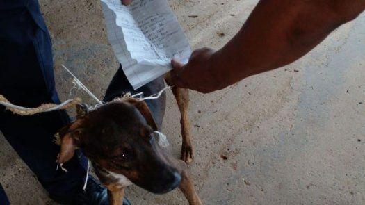 El perro llevaba atada una carta, la cual introduciría a los pabellones del centro penitenciario La Joya.