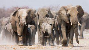Gran preocupación por la misteriosa muerte de unos 300 elefantes en Botsuana