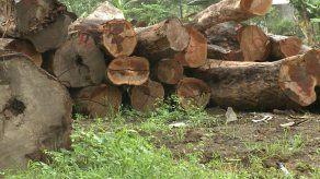 MiAmbiente: Veraguas es la provincia más deforestada del país