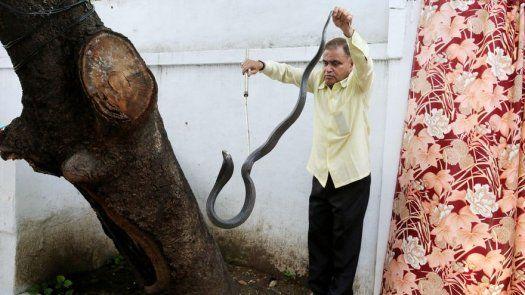 El hombre serpiente de India, 222.000 reptiles cazados en 30 años de oficio