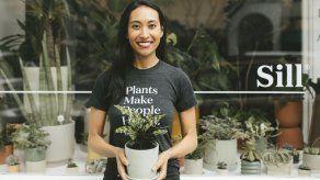 Crece venta de plantas para interiores durante la pandemia