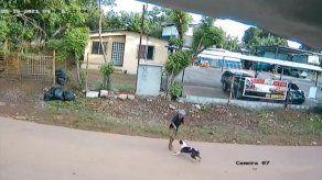 Mujer que fue atacada por un perro en Chiriquí es dada de alta