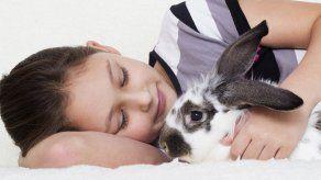 ¿Por qué un conejo es mejor mascota que un perro?