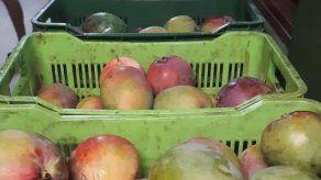 Decomisan 587 cajas con mangos que ingresaron ilegalmente al país