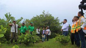 MOP entrega a MiAmbiente compensación de 11.9 hectáreas de manglar en Isla Galeta