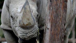 Muerte de jirafa y rino causa alarma en zoo de Buenos Aires