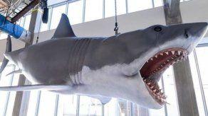 Tiburón se instala en el Museo de los Oscar en Los Ángeles