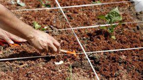 Alimentos orgánicos brotan en los tejados de una favela de Río