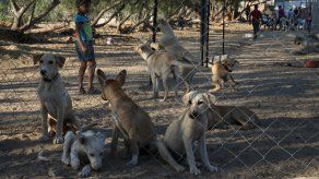 Al hombre se le decretó la medida cautelar personal de prohibición de no realizar actividades relacionadas con animales domésticos.