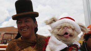 Los canes participan de festejos navideños en Bolivia