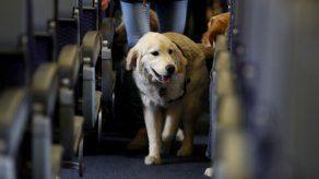 Se acaba el tiempo para animales de apoyo en los vuelos