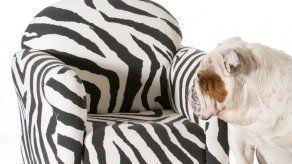 Compañías de muebles ofrecen productos para mascotas