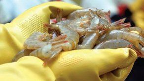 China detecta el coronavirus en paquetes de camarones ecuatorianos
