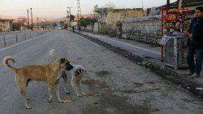 Perros abandonados durante la pandemia en Catar buscan familia