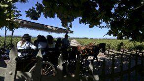 Mundo del vino chileno se abre al turismo