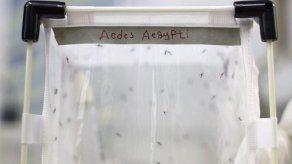 Científicos trabajan contrarreloj para descubrir las características del zika