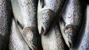 EEUU importó más pescados en 2017 que nunca