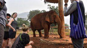 Elefantes para turistas pasan hambre en Tailandia por pandemia