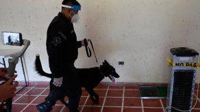 Esta enfermedad tiene un olor y, aunque los humanos no pueden percibirlo, estos canes sí.