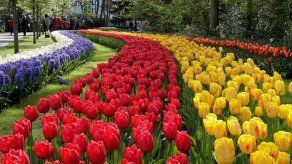 El parque floral Keukenhof rinde homenaje al Siglo de Oro holandés