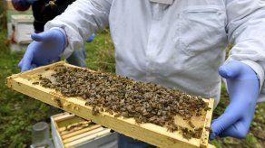 Registran alto índice de mortandad de abejas en EEUU