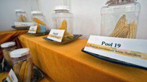 Polonia prohíbe cultivos transgénicos de BASF y de Monsanto