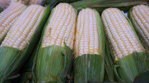 4 mil hectáreas de maíz y arroz afectadas
