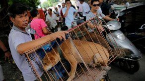 Activistas aprovechan concurso canino en China para denunciar consumo de carne de perro