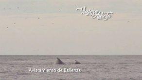 ¿Dónde disfrutar del avistamiento de ballenas en Panamá?