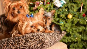 5 Ideas para regalarle a tu mascota en Navidad