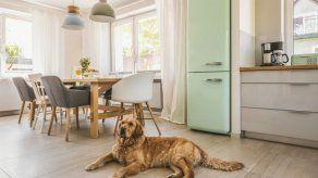 ¿Cómo mantener la casa limpia teniendo mascotas en tiempos de pandemia?