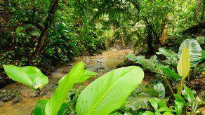 Mueren 4 migrantes cuando cruzaban la selva del Darién.