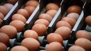 1.500 huevos se convierten en 15.000 con la traducción automática