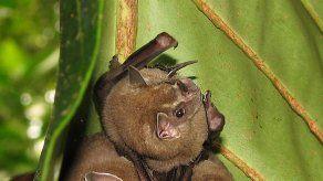 Hallan nueva especie de murciélago en el Jardín Botánico de Bogotá